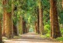 Życie 850 Amerykanów rocznie ratują… drzewa