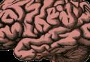 """""""Hormon młodości"""" jest w stanie przyspieszyć pracę mózgu"""