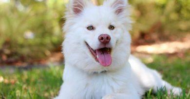 Posiadanie zwierząt domowych może obniżyć stres u osób starszych