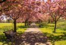Parki miejskie zwiększają szczęście i prowadzą do poprawy zadowolenia z życia