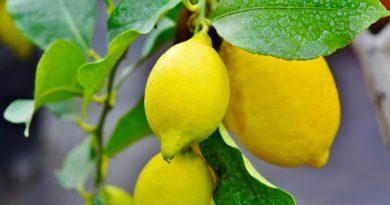 Zapach cytryn może pomóc ci poczuć się lżejszym