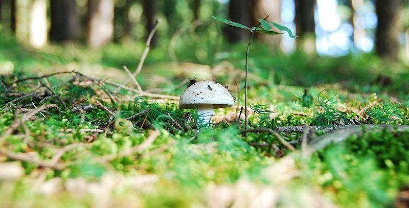 Jedzenie grzybów może zmniejszyć ryzyko zachorowania na raka prostaty