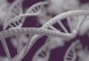 Odkryto tajemnicę nieśmiertelności genetycznej