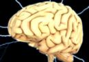 Niezwykłe odkrycie na temat ludzkiego mózgu