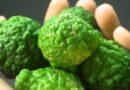 Naukowcy odkryli niezwykłe właściwości bergamotki. Ma zdolność do niszczenia…
